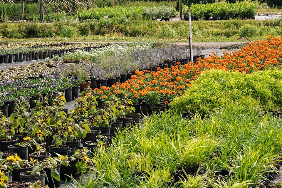 Plants on yard